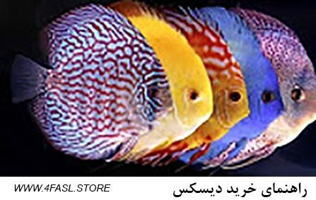 راهنمای خرید دیسکس در ایران. راهنمای خرید و نگهداری ماهی دیسکس . دیسکس سالم غذاخور است، جفت دیسکس، تخم دیسکس با کیفیت باشد و ... راهنمای خرید دیسکس راهنمای خرید دیسکس در ایران